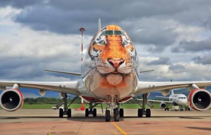 Big Plane Big Cat