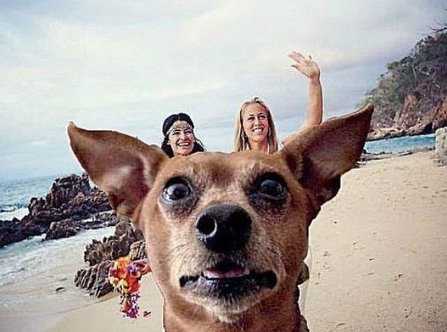 Canine Photobomb