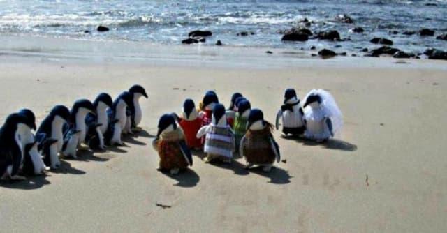 Penguins Get Hitched