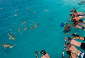 Swimming With Sharks Extreme Vacations Locations